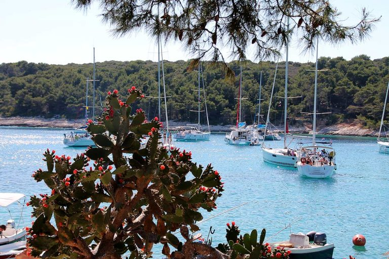 Look at Palmižana bay