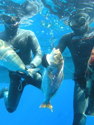 Spearfishing Tour from Split