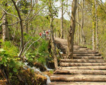 wooden trail through park