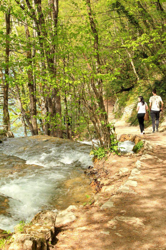 trail through forrest
