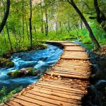 trail-through-the-forrest-plitvice-tour