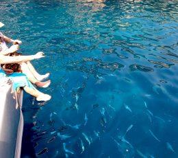 feeding-fish